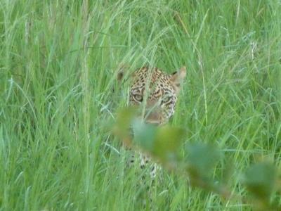 0121leopard
